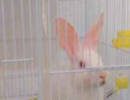 Lovely rabbit & 2 love birds for sale with...