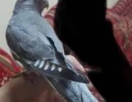 bird like this needed