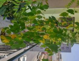 Mullberry plant and neem plant