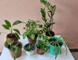 Group of indoor plants for sale