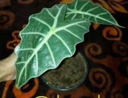 Indoor Plants to let go..