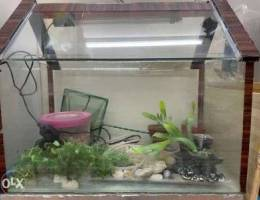 Aquarium with light and stone for sale