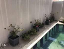 Outdoor plant's