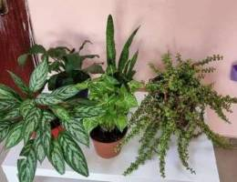 Beautiful plant for sale