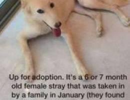 dog for adoption urgently