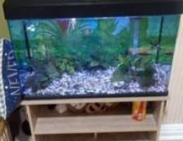 حوض سمك بحاله ممتازه