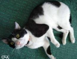 Male cat for adapted